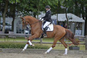 Linda fremviser hestene under rytter til kåringer og bedømmelser.
